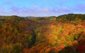 Обои осень, лес, небо, деревья, холмы