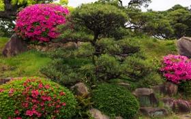 Обои цветы, парк, камни, сад, кусты, рододендрон