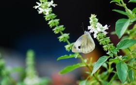 Обои бабочка, цветы, фон, размытость