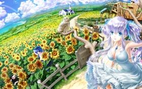 Картинка поле, небо, девушка, облака, подсолнухи, дом, дерево