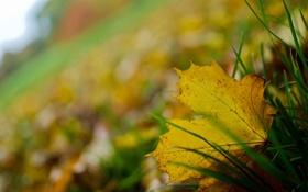 Обои трава, лист, опавший, осенний