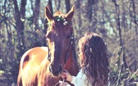 Картинка девушка, животное, конь, волосы, лошадь