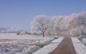 Картинка зима, дорога, снег, деревья, пейзаж, природа, обои