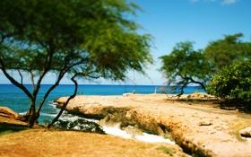 Обои дорога, море, волны, деревья, камни, побережье, Пляж