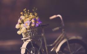 Обои цветы, велосипед, фон