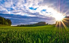 Обои зелень, поле, трава, облака, лучи солнца