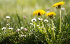 Картинка природа, травка, летние цветочки