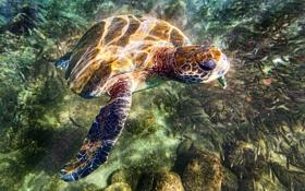 Обои море, вода, камни, черепаха, дно, блик