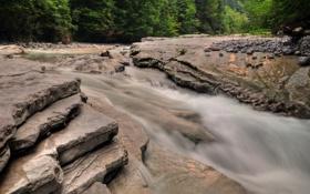 Картинка лес, река, деревья, течение, вода, пороги, камни