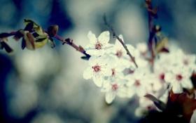 Обои листья, макро, цветы, природа, фото, обои, растения