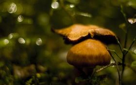 Картинка природа, грибы, фокус, размытость, боке