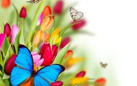 Картинка цветы, коллаж, бабочка, крылья, тюльпаны, мотылек