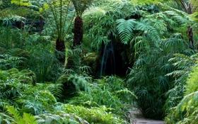 Картинка дорожка, трава, зелень, Tatton Park, Великобритания, кусты, деревья