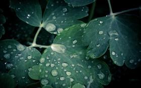 Обои капли, water drops, 2560x1600, вода, leaves, листки, macro