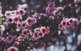 Обои розовый, цветок, лепесток, веточка