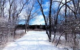 Картинка зима, лес, небо, снег, деревья, следы