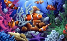 Обои рыбки, под водой, морская звезда, кораллы, ракушка