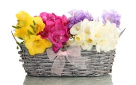 Обои букет, бант, корзина, цветы