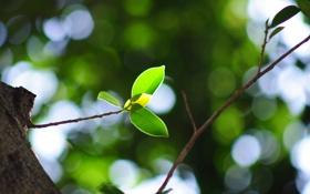 Картинка листья, листва, листок, листочки, листочек, листки, листики