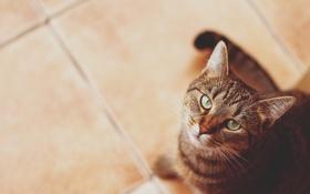 Картинка глаза, кот, усы, зеленые, смотрит