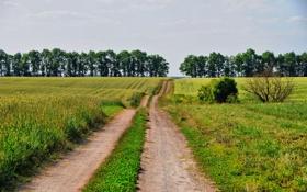 Обои дорога, лес, небо, деревья, следы, природа, фото