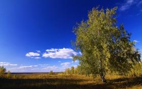Обои поле, небо, дерево