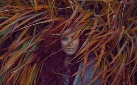 Картинка взгляд, девушка, природа, лицо, волосы
