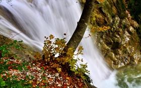 Картинка листья, вода, река, камни, дерево, водопад, поток