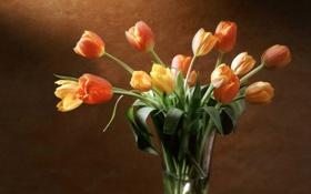 Картинка стена, желтые, тюльпаны, красные, ваза, оранжевые