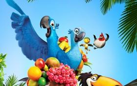 Обои птицы, мультфильм, попугай, фрукты, тукан, рио, голубчик