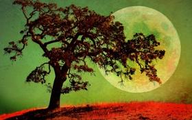 Обои свет, пейзаж, ночь, дерево, планета, спутник