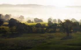 Обои природа, деревья, туман, холмы