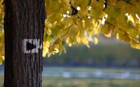 Обои природа, осень, дерево