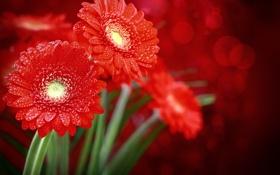 Обои капли, цветы, стебли, боке