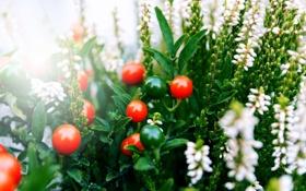 Картинка макро, цветы, ягоды, букет