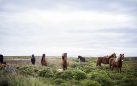 Картинка поле, трава, конь, лошадь, кони, луг, табун