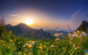 Картинка цветы, горы, весна, луг