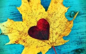 Обои листья, любовь, сердце, love, листопад, heart, autumn