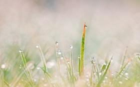 Обои трава, росинки, макро
