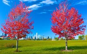 Картинка осень, трава, листья, деревья, город, парк, Чикаго