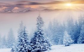 Обои зима, лес, снег, деревья, природа