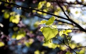 Обои листья, ветки, природа, фокус, резкость