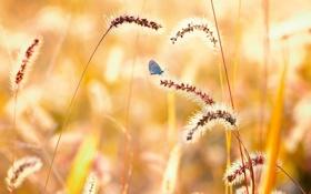 Обои природа, бабочка, лето