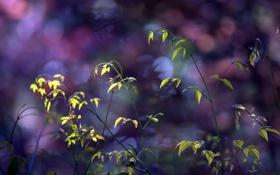 Обои листья, стебли, растение, боке