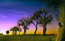 Обои небо, деревья, пейзаж