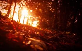 Обои Листья, осень, свет, деревья