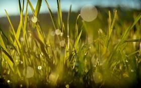 Обои капли, лето, роса, зелень, травка, цвет, свечение
