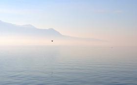 Картинка море, туман, озеро, холмы, птица