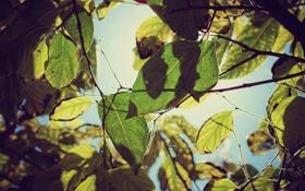 Картинка картинки, осень, ветки, солнце, дерево, листья, обои