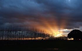 Картинка небо, деревья, пейзаж, закат, природа, силуэт